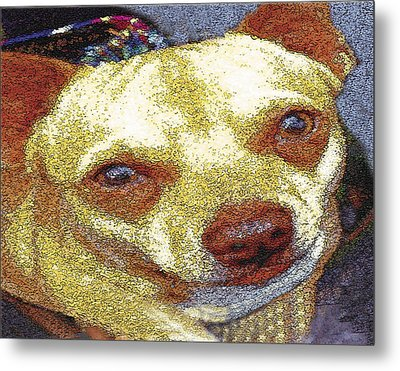 Chihuahua Metal Print by Alice Ramirez