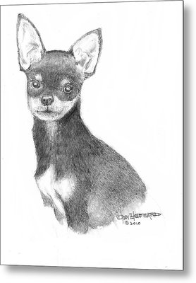 Chihuahua Metal Print by Jim Hubbard