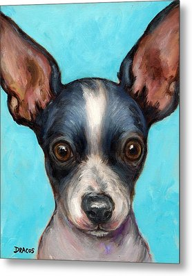 Chihuahua Puppy With Big Ears Metal Print by Dottie Dracos