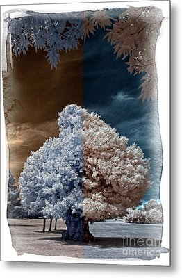 Childhood Oak Tree - Infrared Photography Metal Print by Steven Cragg
