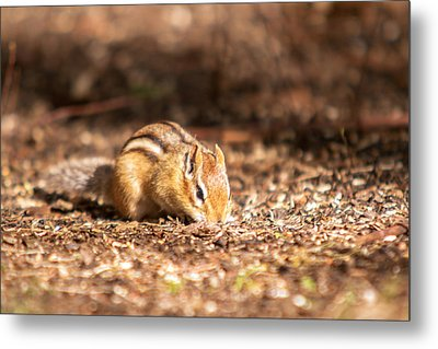 Metal Print featuring the photograph Chipmunk by Josef Pittner
