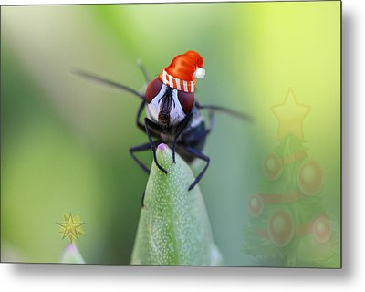 Christmas Blow Fly Metal Print by Ronel Broderick