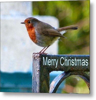 Christmas Robin Metal Print by Debra Collins
