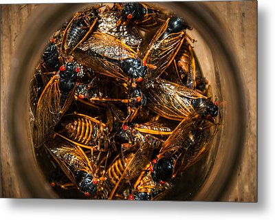 Cicada Madness Metal Print