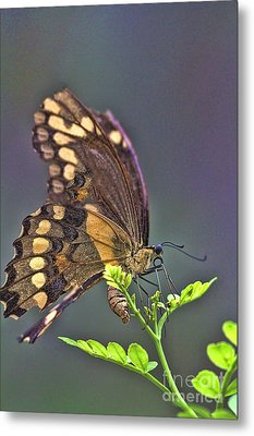 Circle Of Life Metal Print by Anne Rodkin