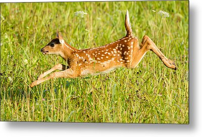 Classic Pose  Metal Print by Glenn Lawrence