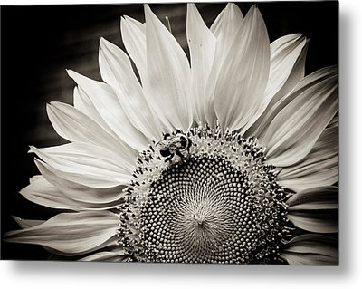 Classic Sunflower Metal Print by Sara Frank