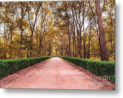 Clay Road In The National Park Metal Print by Mongkol Chakritthakool