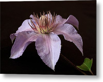 Metal Print featuring the photograph Clematis by Shirley Mitchell
