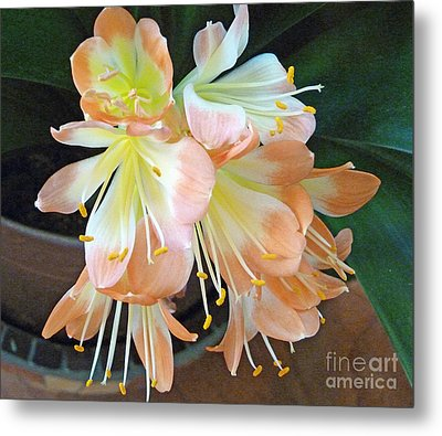 Clivia Metal Print by Louise Peardon