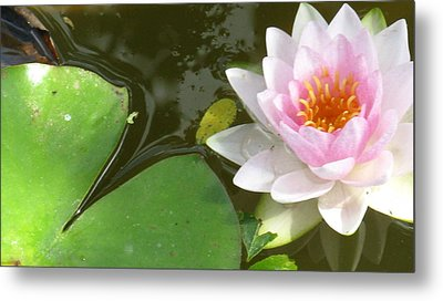 Close-up Lily Metal Print by Debbie Finley