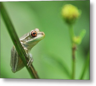 Close Up Of Frog Metal Print by Lon Fong Martin
