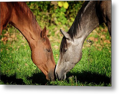 Close Up Of Horses Metal Print by Ryan Courson Photography