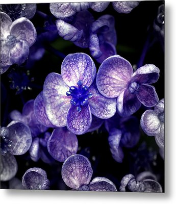Close Up Of Purple Flowers Metal Print by Sner3jp