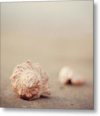 Close Up Of Shells On Beach Metal Print by COPYRIGHT© Marianna Di Ferdinando