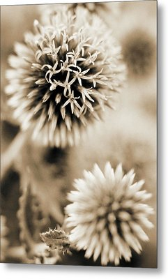 Close-up Of Spiky Plants Metal Print by Andrea Sperling
