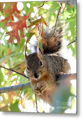 Eating In Peace Metal Print