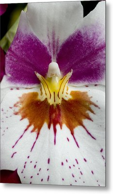 Close-up Of The Center Of An Orchid Metal Print by Todd Gipstein