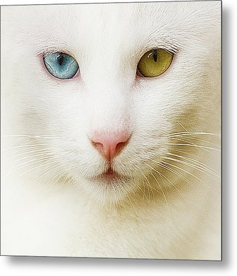 Close Up Of White Cat Metal Print by Blink
