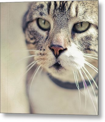 Closeup Of Face Of Tabby Cat Metal Print by Cindy Prins