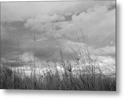 Metal Print featuring the photograph Cloud Watching by Kathleen Grace
