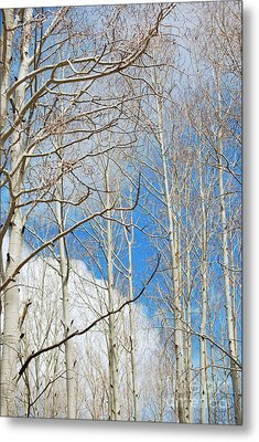 Cloudy Aspen Sky Metal Print by Donna Greene