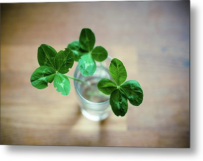 Clovers Leaves In Glass Metal Print by Øystein Tveiten