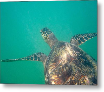 Clyde The Hawaiian Sea Turtle Metal Print by Erika Swartzkopf