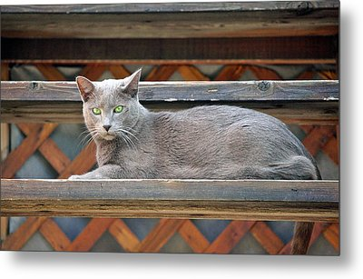 Clyde's Rest Time Metal Print by James Steele