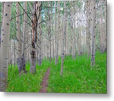 Co Aspen Mtn.bike Trail Metal Print