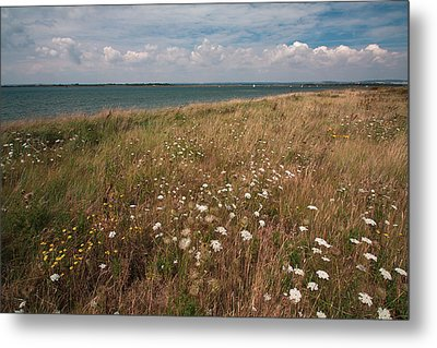 Metal Print featuring the photograph Coastal Flowers by Shirley Mitchell