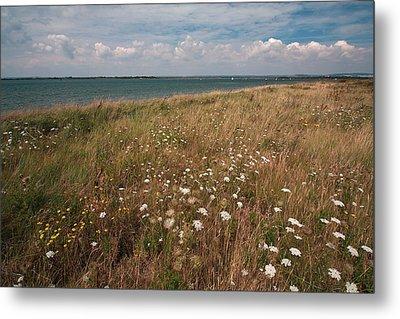 Coastal Flowers Metal Print by Shirley Mitchell