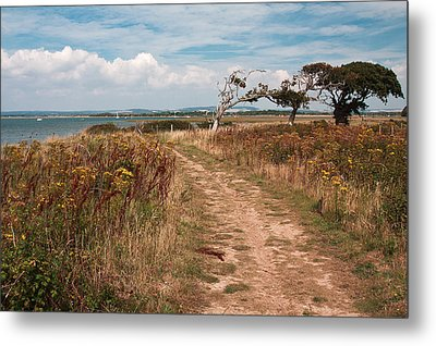 Metal Print featuring the photograph Coastal Path by Shirley Mitchell