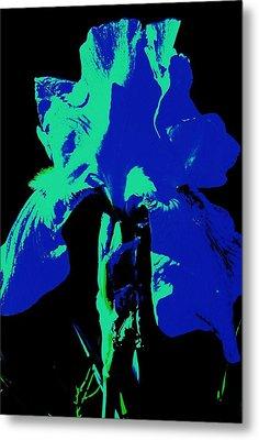 Cobalt Iris Metal Print by Todd Sherlock