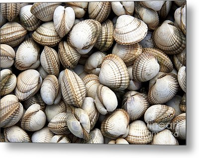 Cockle Shell Background Metal Print by Jane Rix