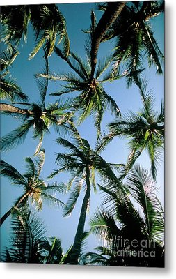 Coconut Palms Metal Print by Magrath Photography