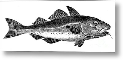 COD Metal Print by Granger