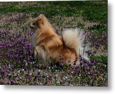 Metal Print featuring the photograph Cody by Karen Harrison