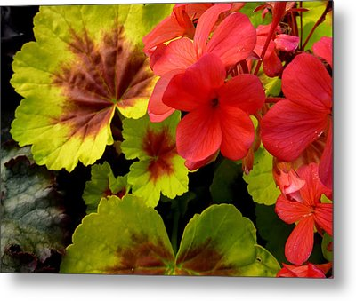 Metal Print featuring the photograph Coleus And Impatiens Blooms by Cindy Wright