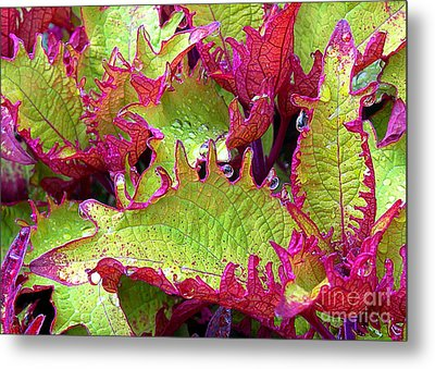 Coleus With Raindrops Metal Print by Judi Bagwell