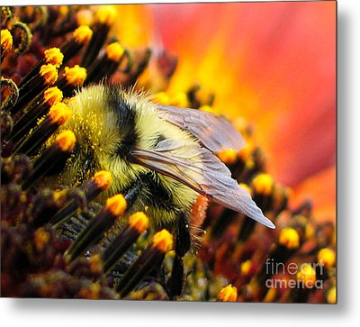Collecting Pollen Metal Print by Vivian Christopher