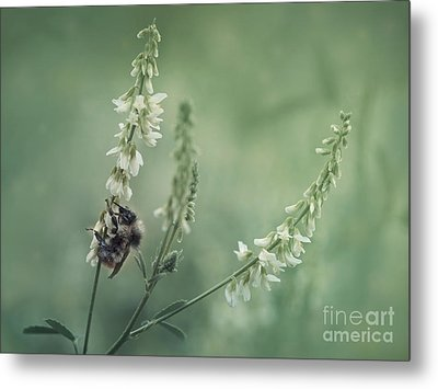 Collecting The Summer Metal Print by Priska Wettstein