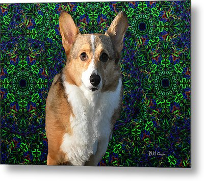 Collie Metal Print by Bill Cannon