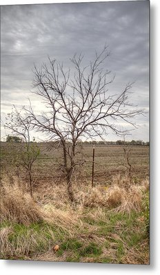 Color - Country Tree Metal Print