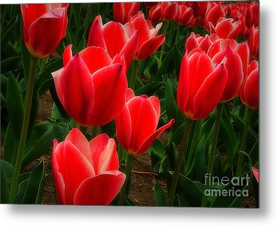 Color Me Red Metal Print by Fred Lassmann