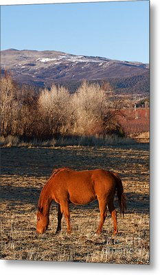 Colorado Horse Ranch At Sunset Near The Rocky Mountains Metal Print by ELITE IMAGE photography By Chad McDermott
