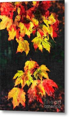 Colorful Autumn Leaves IIi Metal Print by Dan Carmichael