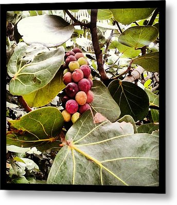 Colorful Beauty Metal Print by Chasity Johnson