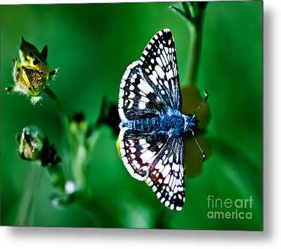 Colorful Butterfly Metal Print by Mitch Shindelbower