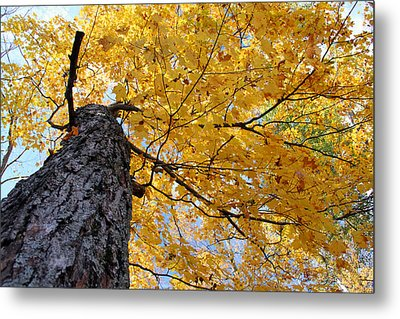 Colorful Canopy 130 Metal Print by Mark J Seefeldt